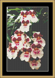 Pansies | Crafting | Cross-Stitch | Other