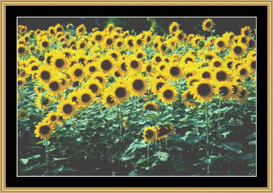 Sunflower Fields | Crafting | Cross-Stitch | Other