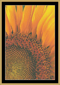 Sunflower | Crafting | Cross-Stitch | Other