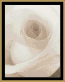 White Rose | Crafting | Cross-Stitch | Other