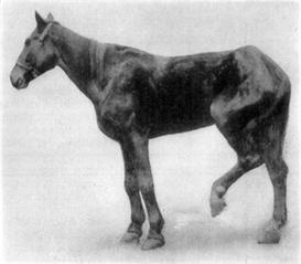 Lameness of Horse, Diagnosis & Cure | eBooks | Health