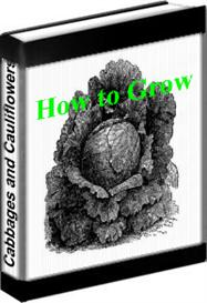 Classic How to Grow Cabbages and Cauliflowers, Download | eBooks | Home and Garden