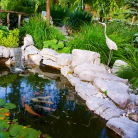 A Koi Pond in Summer | Audio Books | Health and Well Being