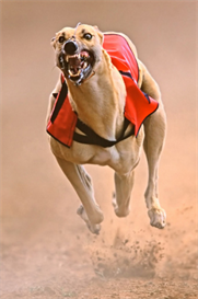 Greyhound Global Betting Plan | eBooks | Sports