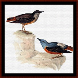 Rock Thrush - Wildlife cross stitch pattern by Cross Stitch Collectibles | Crafting | Cross-Stitch | Wall Hangings