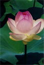 Seeing Tranquility Meditation Workshop | eBooks | Religion and Spirituality