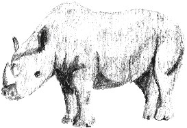 Rhino - Photoshop | Other Files | Clip Art