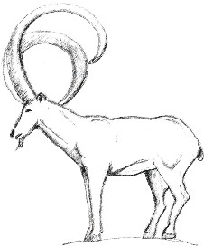 Mountain Goat - Photoshop | Other Files | Clip Art