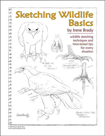 sketching wildlife basics
