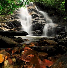 Deep Woods Waterfall - Pure Ambiance | Audio Books | Self-help