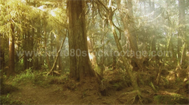 Foggy or Smokey Rainforest HD Stock video footage | Movies and Videos | Music Video