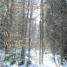 Windy Woodpecker | Music | Ambient