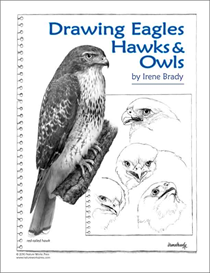 drawing eagles, hawks & owls