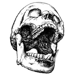 Hand Drawn Skull Illustration | Photos and Images | Digital Art