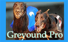 Betfair Greyhound Lay Pro | eBooks | Business and Money