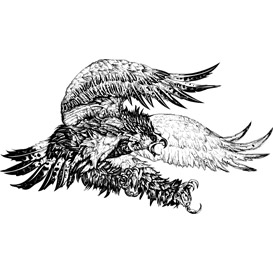 Screaming Eagle Vector Illustration | Photos and Images | Digital Art