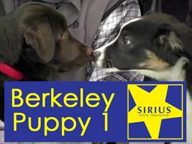 sirius puppy class berkeley p1