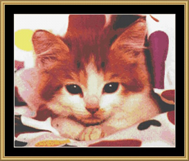 Tabby Kitten - Cross Stitch Download | Crafting | Cross-Stitch | Other