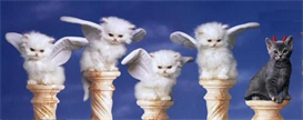 Angle Kittys - Cross Stitch Download | Crafting | Cross-Stitch | Other