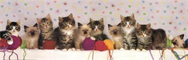 Kitten Line Up - Cross Stitch Download | Crafting | Cross-Stitch | Other
