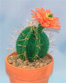 cactus, flowering pattern