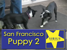 SIRIUS Puppy Class - SF P2 | Movies and Videos | Educational