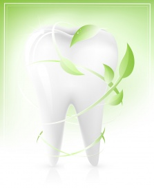 Vectorlib RF (Standard License): Vector illustration of white tooth with light green leaves-arrows. Dental concept.
