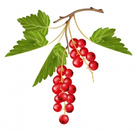 Vectorlib RF (Standard License): Ripe red currant berry