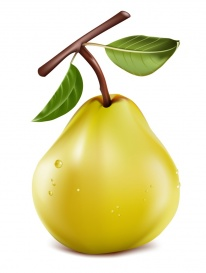 vectorlib rf (standard license): photo-realistic vector. ripe pear with water drops.