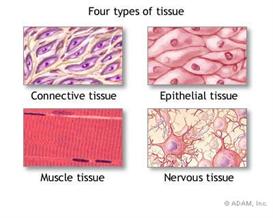 Tissue 2010 | Audio Books | Science