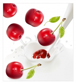Vectorlib RF (Standard License): Vector illustration. Ripe red cherries falling into the milky splash.