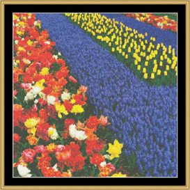 Tulips & Hyacinyha - Cross Stitch Pattern Download | Crafting | Cross-Stitch | Other