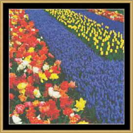 Tulips & Hyacinyha - Cross Stitch Pattern Download   Crafting   Cross-Stitch   Other