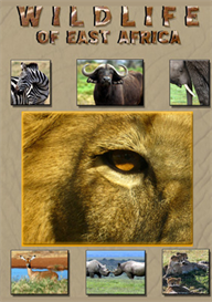 Wildlife of East Africa   Movies and Videos   Action