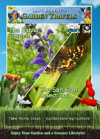 Garden Travels  The Salvia Garden /  The San Fran Insect Zoo | Movies and Videos | Action