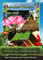 Garden Travels  Water Lilies / Honey | Movies and Videos | Action