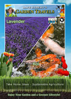 Garden Travels  Lavender/Koi | Movies and Videos | Action