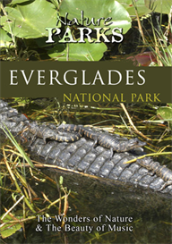 Nature Parks  EVERGLADES NATIONAL PARK Florida | Movies and Videos | Action