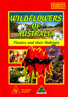 Wildflowers Of Australia Flowers and their Habitats | Movies and Videos | Action