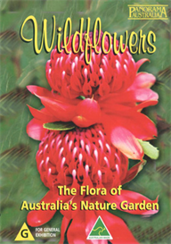 Wildflowers The Flora of Australia's Nature Garden   Movies and Videos   Action