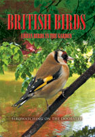 British Birds  Urban Birds in the Garden | Movies and Videos | Action