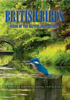 British Birds  Birds of the British Countryside | Movies and Videos | Action