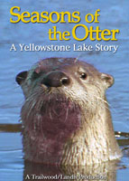 Seasons of the Otter | Movies and Videos | Action