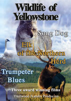 Wildlife of Yellowstone | Movies and Videos | Action
