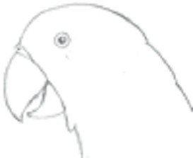 parrot - tif mac | Other Files | Clip Art
