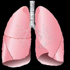 Respiratory 2011 | Audio Books | Science
