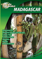 cities of the world Madagascar shepherd entertainment | Movies and Videos | Other