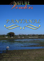 Nature Wonders  PANTANAL DVD Global Television Arcadia Films | Movies and Videos | Other