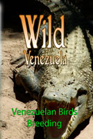 Wild Venezuela Venezuelan Birds Breeding DVD Ferraro Nature Films | Movies and Videos | Special Interest