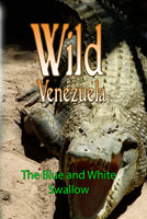 Wild Venezuela The Blue and White Swallow DVD Ferraro Nature Films | Movies and Videos | Special Interest